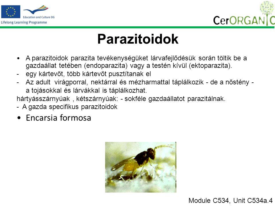 Parazitoidok A parazitoidok parazita tevékenységüket lárvafejlődésük során töltik be a gazdaállat tetében (endoparazita) vagy a testén kívül (ektoparazita).