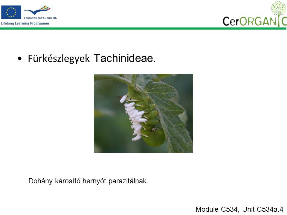 Fürkészlegyek Tachinideae. Dohány károsító hernyót parazitálnak Module C534, Unit C534a.4