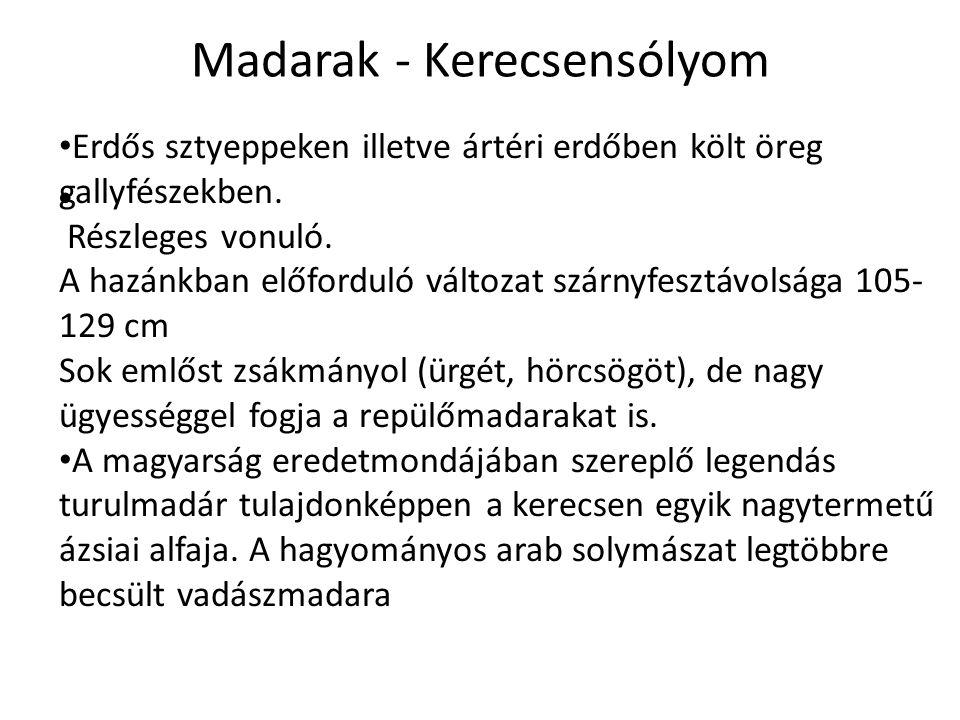 Madarak - Kerecsensólyom Erdős sztyeppeken illetve ártéri erdőben költ öreg gallyfészekben.