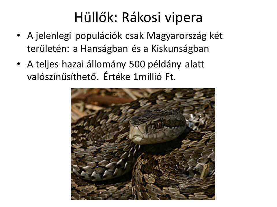 Hüllők: Rákosi vipera A jelenlegi populációk csak Magyarország két területén: a Hanságban és a Kiskunságban A teljes hazai állomány 500 példány alatt valószínűsíthető.