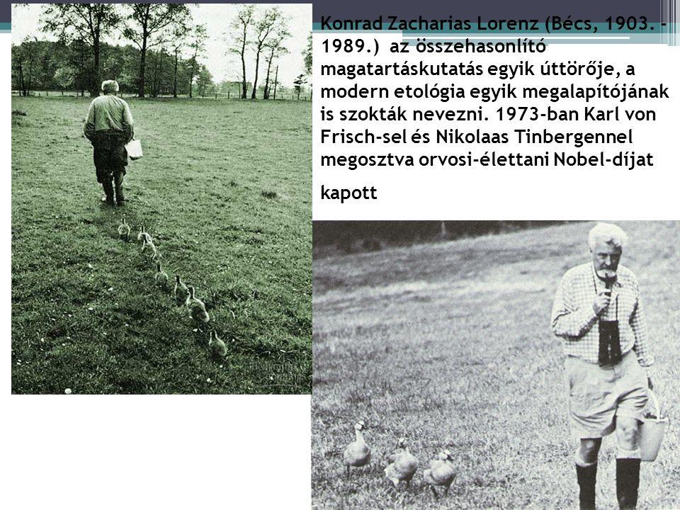 Az imprinting Korai bevésődés Leírója: Konrad Lorenz) Lényege: tartós kötődés alakul ki azon faj egyedeihez, amelyet az újszülött egyed először megpil