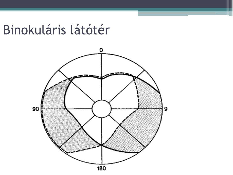 Távolság- és mélységészlelés Monokuláris jelzőmozzanatok Relatív nagyság Relatív magasság Takarás Lineáris perspektíva Levegő perspektíva Binokuláris