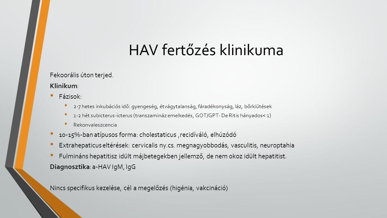 HAV fertőzés klinikuma Fekoorális úton terjed. Klinikum: Fázisok: 2-7 hetes inkubációs idő: gyengeség, étvágytalanság, fáradékonyság, láz, bőrkiütések