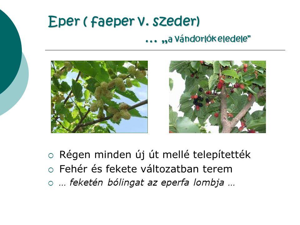 Eper ( faeper v.