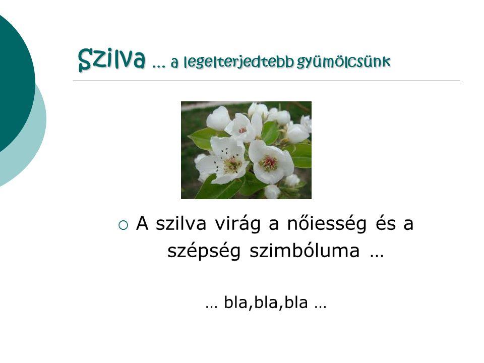 Szilva … a legelterjedtebb gyümölcsünk  A szilva virág a nőiesség és a szépség szimbóluma … … bla,bla,bla …
