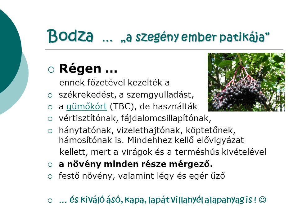 """Bodza … """"a szegény ember patikája  Régen … ennek főzetével kezelték a  székrekedést, a szemgyulladást,  a gümőkórt (TBC), de használtákgümőkórt  vértisztítónak, fájdalomcsillapítónak,  hánytatónak, vizelethajtónak, köptetőnek, hámosítónak is."""