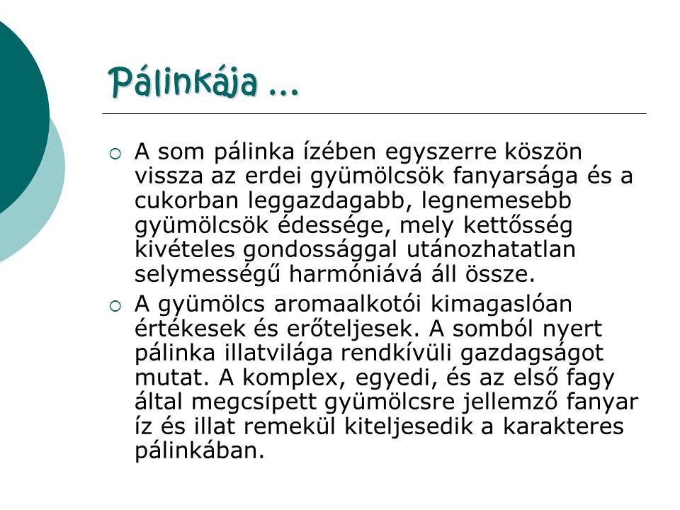 Pálinkája …  A som pálinka ízében egyszerre köszön vissza az erdei gyümölcsök fanyarsága és a cukorban leggazdagabb, legnemesebb gyümölcsök édessége, mely kettősség kivételes gondossággal utánozhatatlan selymességű harmóniává áll össze.