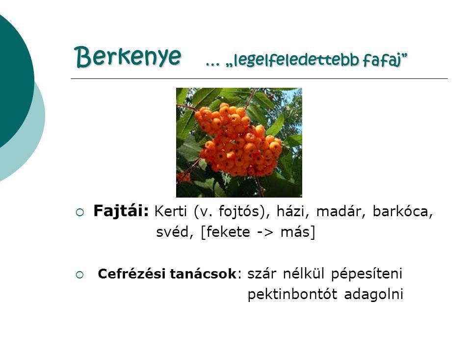 "Berkenye … ""legelfeledettebb fafaj  Fajtái: Kerti (v."