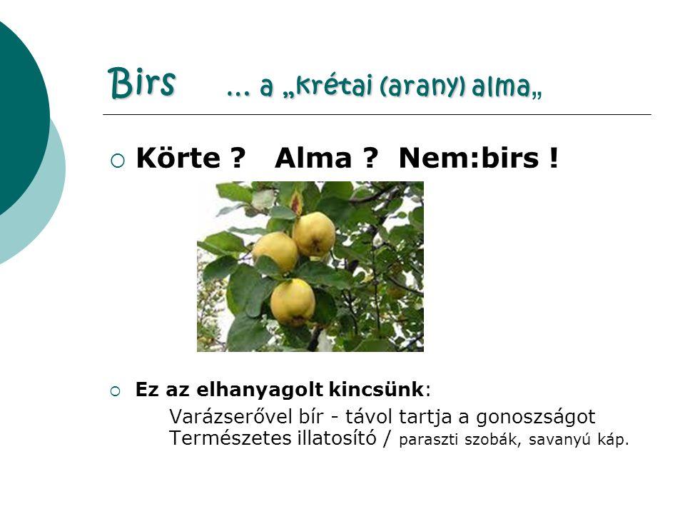 """Birs … a """"krétai (arany) alma Birs … a """"krétai (arany) alma """"  Körte ."""