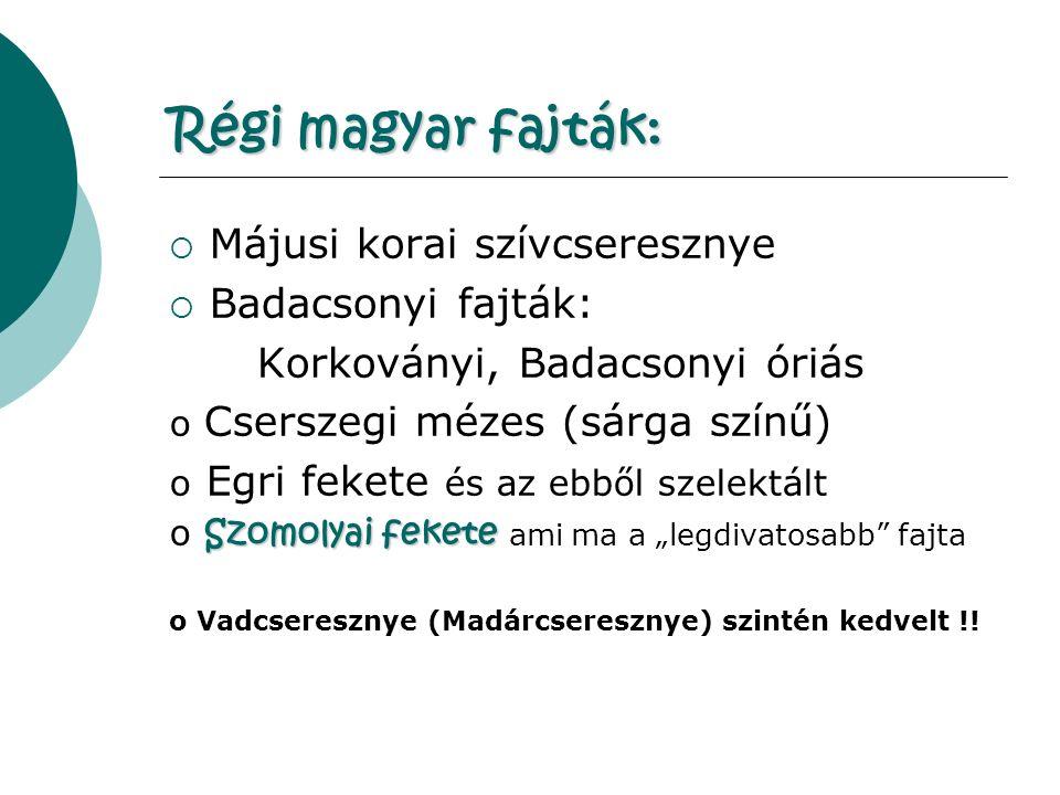"""Régi magyar fajták:  Májusi korai szívcseresznye  Badacsonyi fajták: Korkoványi, Badacsonyi óriás o Cserszegi mézes (sárga színű) o Egri fekete és az ebből szelektált Szomolyai fekete o Szomolyai fekete ami ma a """"legdivatosabb fajta o Vadcseresznye (Madárcseresznye) szintén kedvelt !!"""