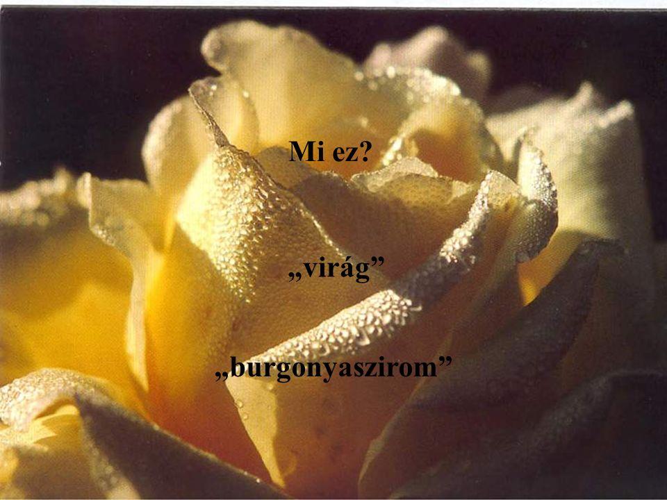 """Mi ez """"virág """"burgonyaszirom"""