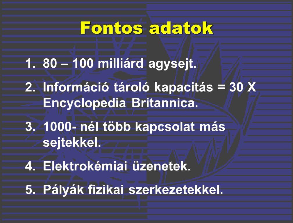 Fontos adatok 1.80 – 100 milliárd agysejt.
