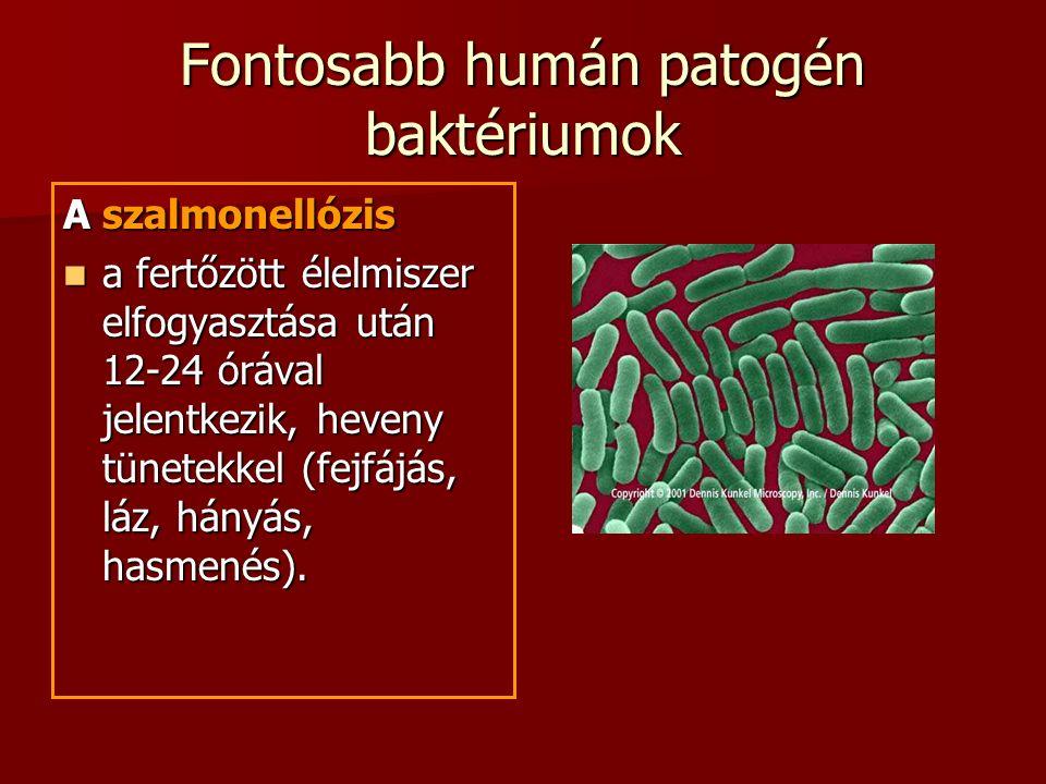 Fontosabb humán patogén baktériumok A szalmonellózis a fertőzött élelmiszer elfogyasztása után 12-24 órával jelentkezik, heveny tünetekkel (fejfájás, láz, hányás, hasmenés).