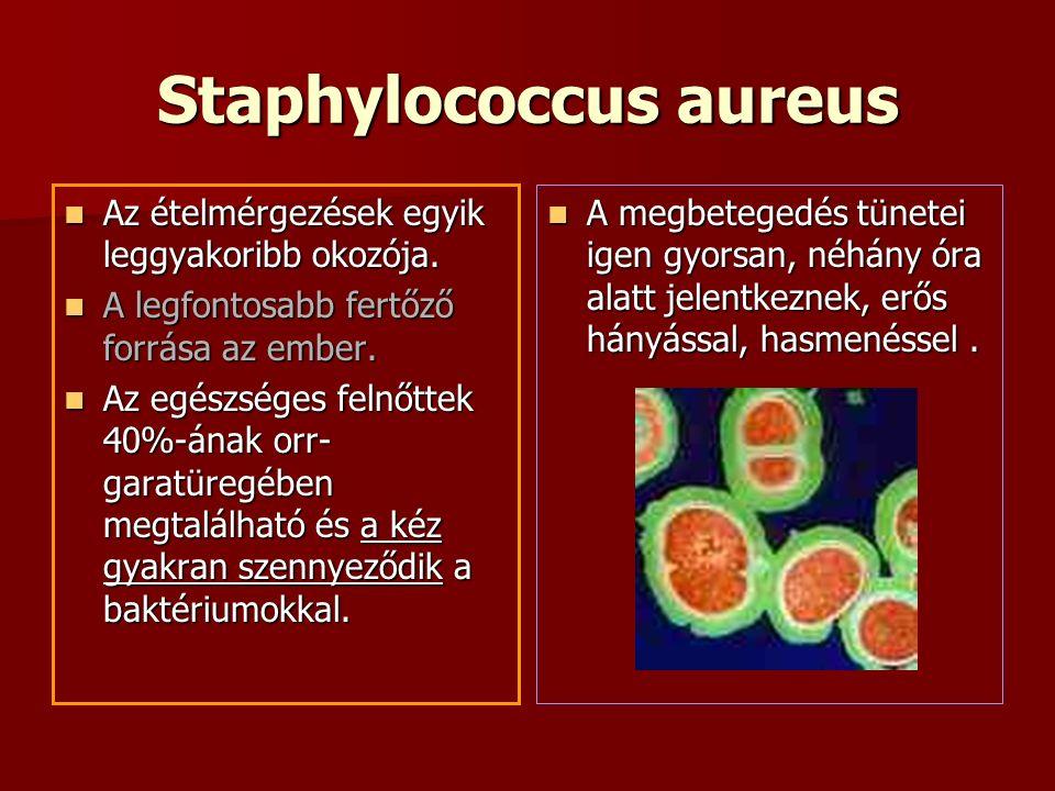 Staphylococcus aureus Az ételmérgezések egyik leggyakoribb okozója.