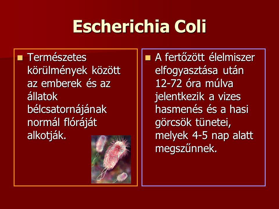 Escherichia Coli Természetes körülmények között az emberek és az állatok bélcsatornájának normál flóráját alkotják.