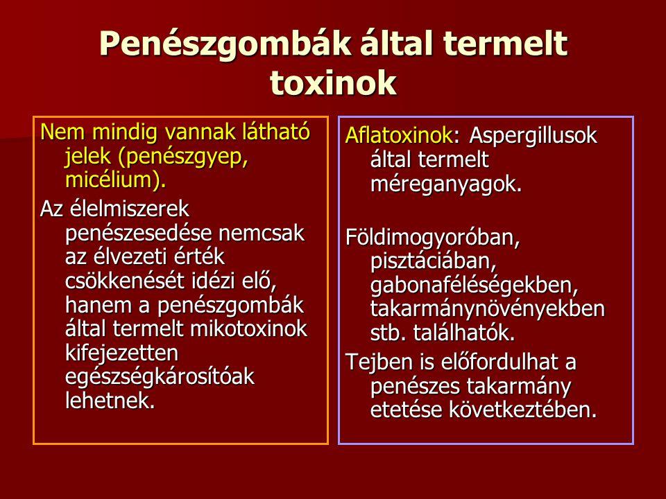 Penészgombák által termelt toxinok Nem mindig vannak látható jelek (penészgyep, micélium).