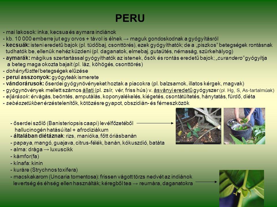 PERU - őserdei szőlő (Banisteriopsis caapi) levélfőzetéből hallucinogén hatású ital + afrodiziákum - általában diétáznak: rizs, manióka, főtt óriásbanán - papaya, mangó, guajava, citrus-félék, banán, kókuszdió, batáta - alma: drága → luxuscikk - kámfor(fa) - kínafa: kinin - kuráre (Strychnos toxifera) - macskakarom (Uncaria tomentosa): frissen vágott törzs nedvét az indiánok levertség és éhség ellen használták; kéregből tea → reumára, daganatokra - mai lakosok: inka, kecsua és aymara indiánok - kb.