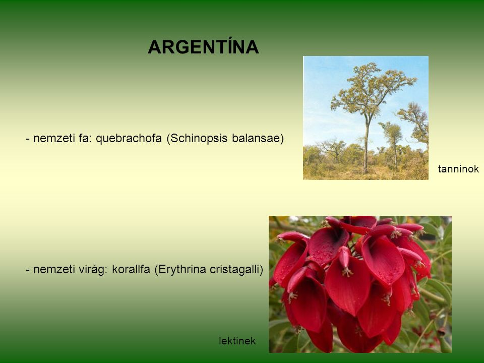 ARGENTÍNA - nemzeti fa: quebrachofa (Schinopsis balansae) - nemzeti virág: korallfa (Erythrina cristagalli) tanninok lektinek