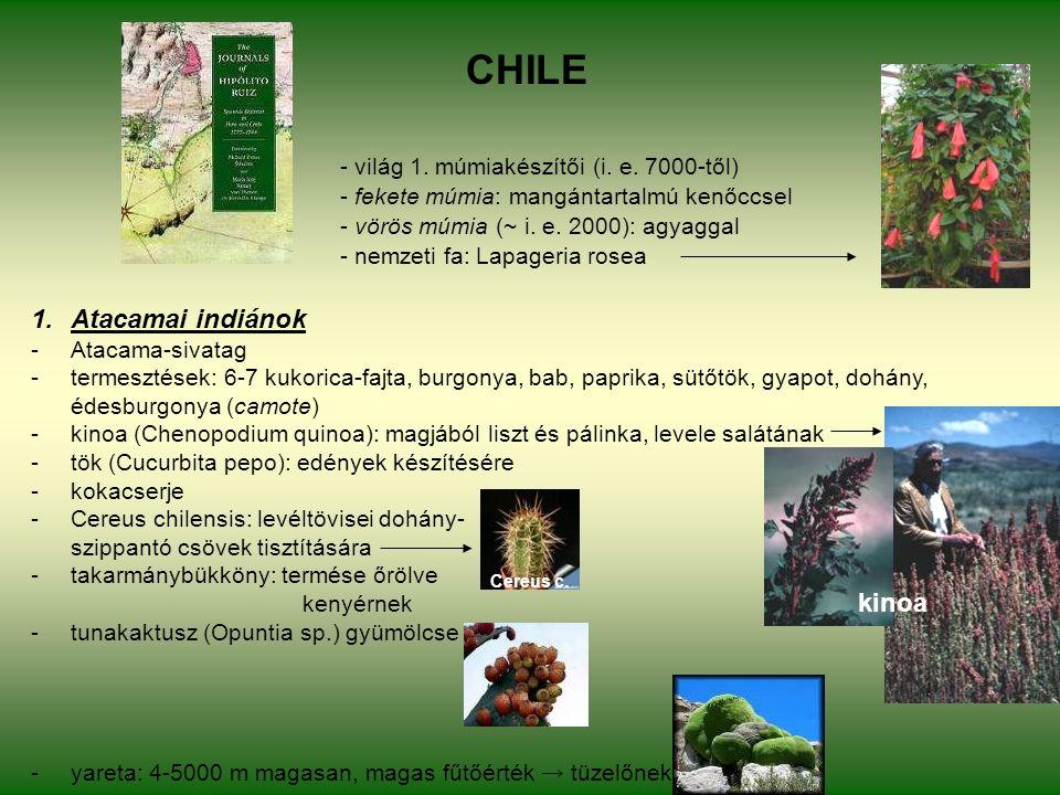 CHILE - világ 1. múmiakészítői (i. e.