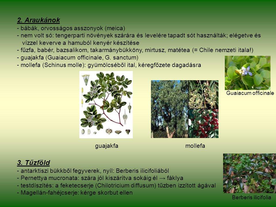 2. Araukánok - bábák, orvosságos asszonyok (meica) - nem volt só: tengerparti növények szárára és levelére tapadt sót használták; elégetve és vízzel k