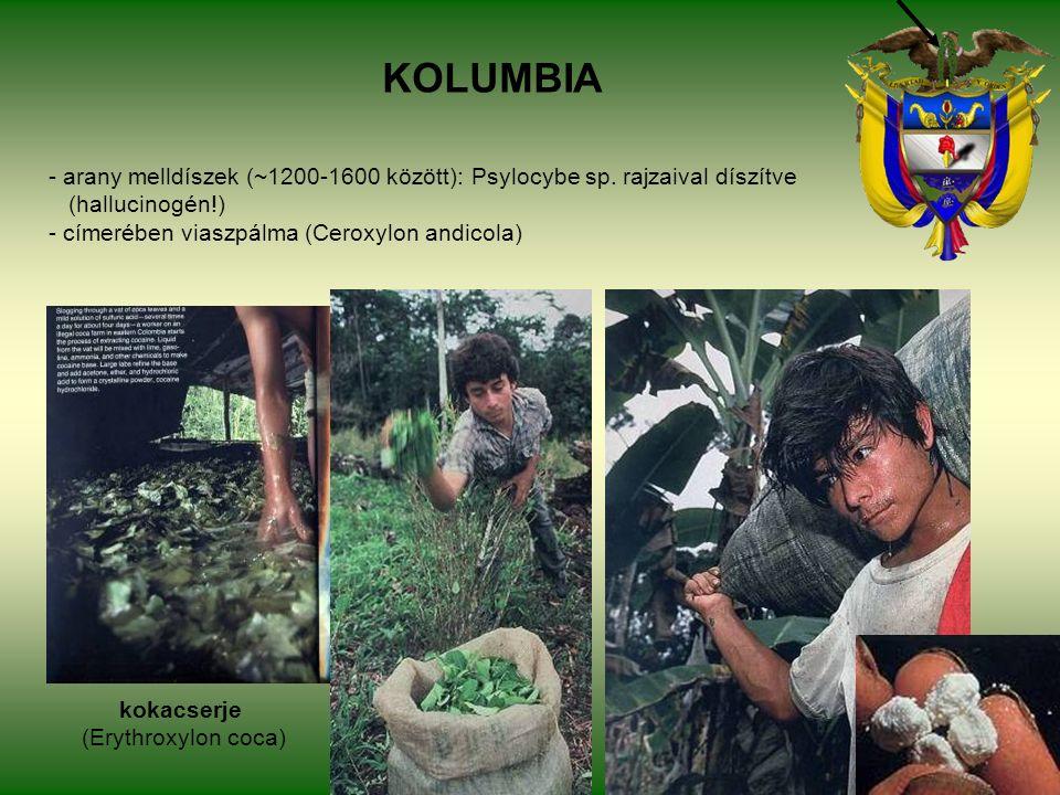KOLUMBIA - arany melldíszek (~1200-1600 között): Psylocybe sp.