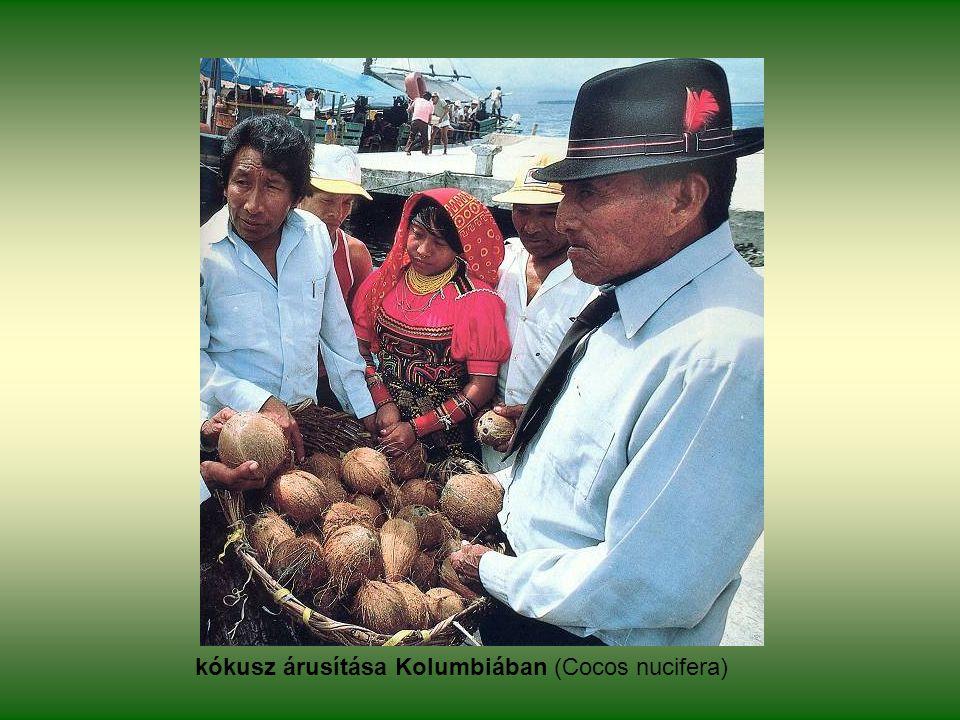 kókusz árusítása Kolumbiában (Cocos nucifera)