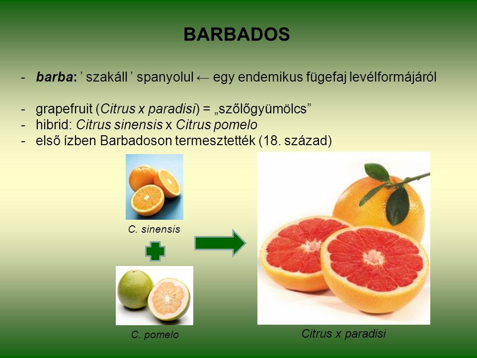 """BARBADOS -barba: ' szakáll ' spanyolul ← egy endemikus fügefaj levélformájáról -grapefruit (Citrus x paradisi) = """"szőlőgyümölcs -hibrid: Citrus sinensis x Citrus pomelo -első ízben Barbadoson termesztették (18."""