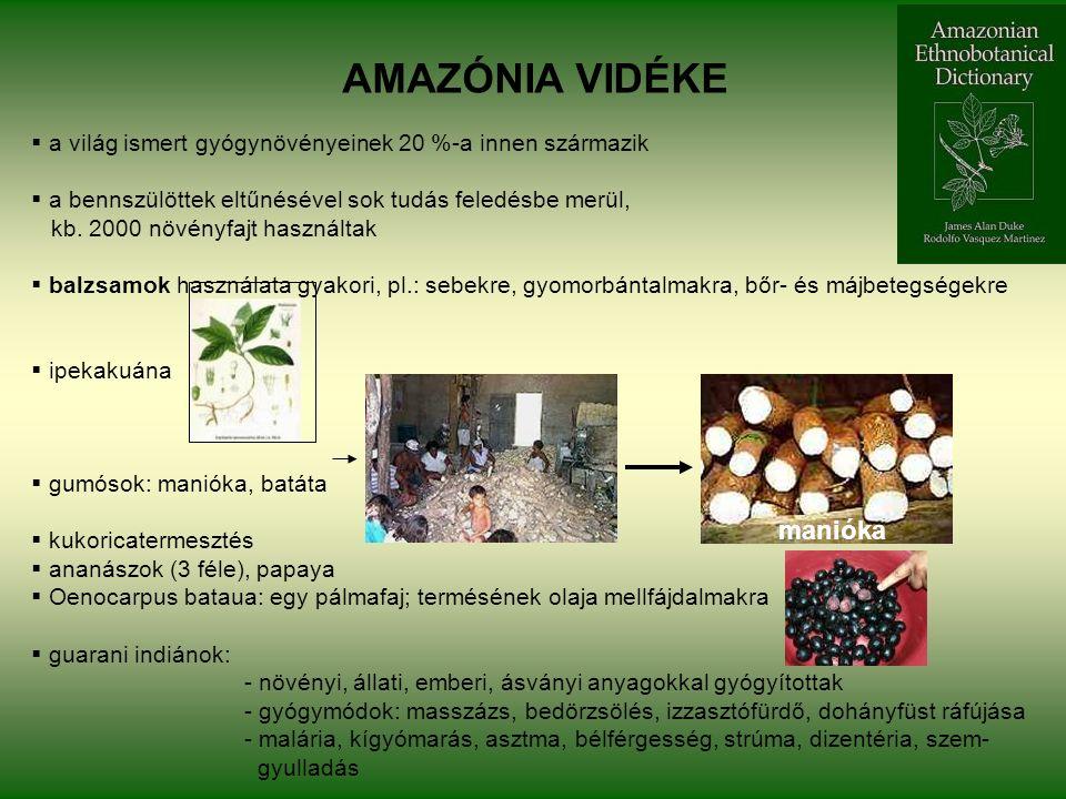 AMAZÓNIA VIDÉKE  a világ ismert gyógynövényeinek 20 %-a innen származik  a bennszülöttek eltűnésével sok tudás feledésbe merül, kb.