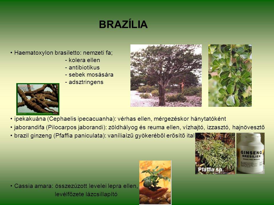 BRAZÍLIA Haematoxylon brasiletto: nemzeti fa; - kolera ellen - antibiotikus - sebek mosására - adsztringens ipekakuána (Cephaelis ipecacuanha): vérhas ellen, mérgezéskor hánytatóként jaborandifa (Pilocarpos jaborandi): zöldhályog és reuma ellen, vízhajtó, izzasztó, hajnövesztő brazil ginzeng (Pfaffia paniculata): vaníliaízű gyökeréből erősítő ital Cassia amara: összezúzott levelei lepra ellen, levélfőzete lázcsillapító Pfaffia sp.