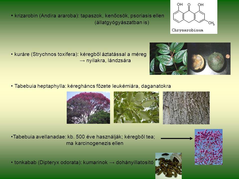 krizarobin (Andira araroba): tapaszok, kenőcsök, psoriasis ellen (állatgyógyászatban is) kuráre (Strychnos toxifera): kéregből áztatással a méreg → nyilakra, lándzsára Tabebuia heptaphylla: kéregháncs főzete leukémiára, daganatokra Tabebuia avellanadae: kb.