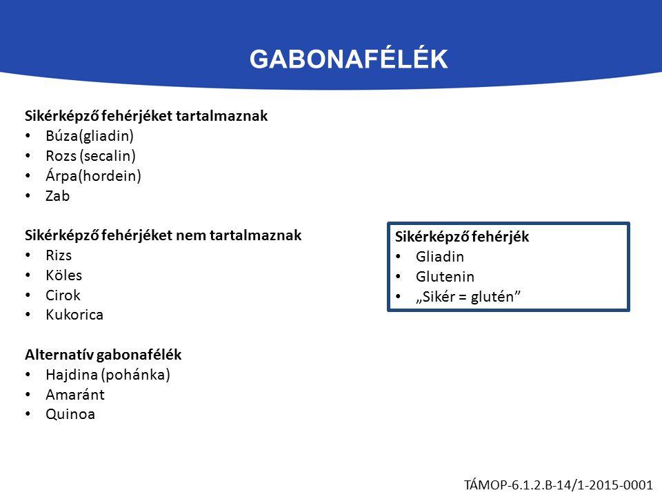 """GABONAFÉLÉK TÁMOP-6.1.2.B-14/1-2015-0001 Sikérképző fehérjéket tartalmaznak Búza(gliadin) Rozs (secalin) Árpa(hordein) Zab Sikérképző fehérjéket nem tartalmaznak Rizs Köles Cirok Kukorica Alternatív gabonafélék Hajdina (pohánka) Amaránt Quinoa Sikérképző fehérjék Gliadin Glutenin """"Sikér = glutén"""