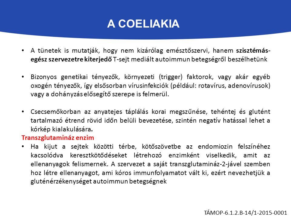 A COELIAKIA TÁMOP-6.1.2.B-14/1-2015-0001 A tünetek is mutatják, hogy nem kizárólag emésztőszervi, hanem szisztémás- egész szervezetre kiterjedő T-sejt mediált autoimmun betegségről beszélhetünk Bizonyos genetikai tényezők, környezeti (trigger) faktorok, vagy akár egyéb oxogén tényezők, így elsősorban vírusinfekciók (például: rotavírus, adenovírusok) vagy a dohányzás elősegítő szerepe is felmerül.