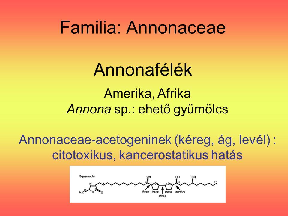 Amaranthus hypochondriacus 'Alegria'