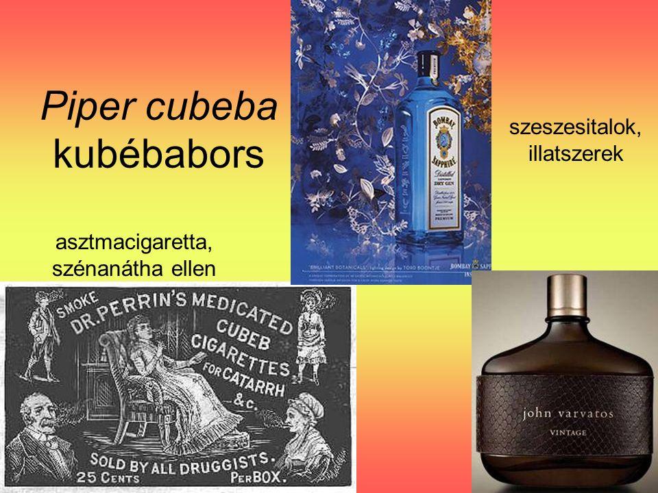Piper cubeba kubébabors asztmacigaretta, szénanátha ellen szeszesitalok, illatszerek