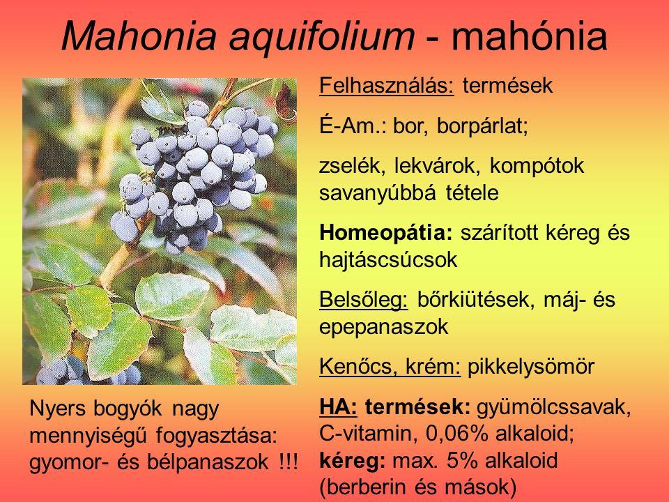 Mahonia aquifolium - mahónia Felhasználás: termések É-Am.: bor, borpárlat; zselék, lekvárok, kompótok savanyúbbá tétele Homeopátia: szárított kéreg és hajtáscsúcsok Belsőleg: bőrkiütések, máj- és epepanaszok Kenőcs, krém: pikkelysömör HA: termések: gyümölcssavak, C-vitamin, 0,06% alkaloid; kéreg: max.