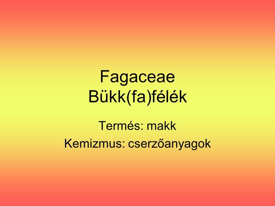 Fagaceae Bükk(fa)félék Termés: makk Kemizmus: cserzőanyagok