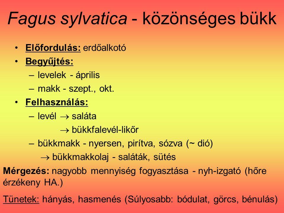 Előfordulás: erdőalkotó Begyűjtés: –levelek - április –makk - szept., okt.