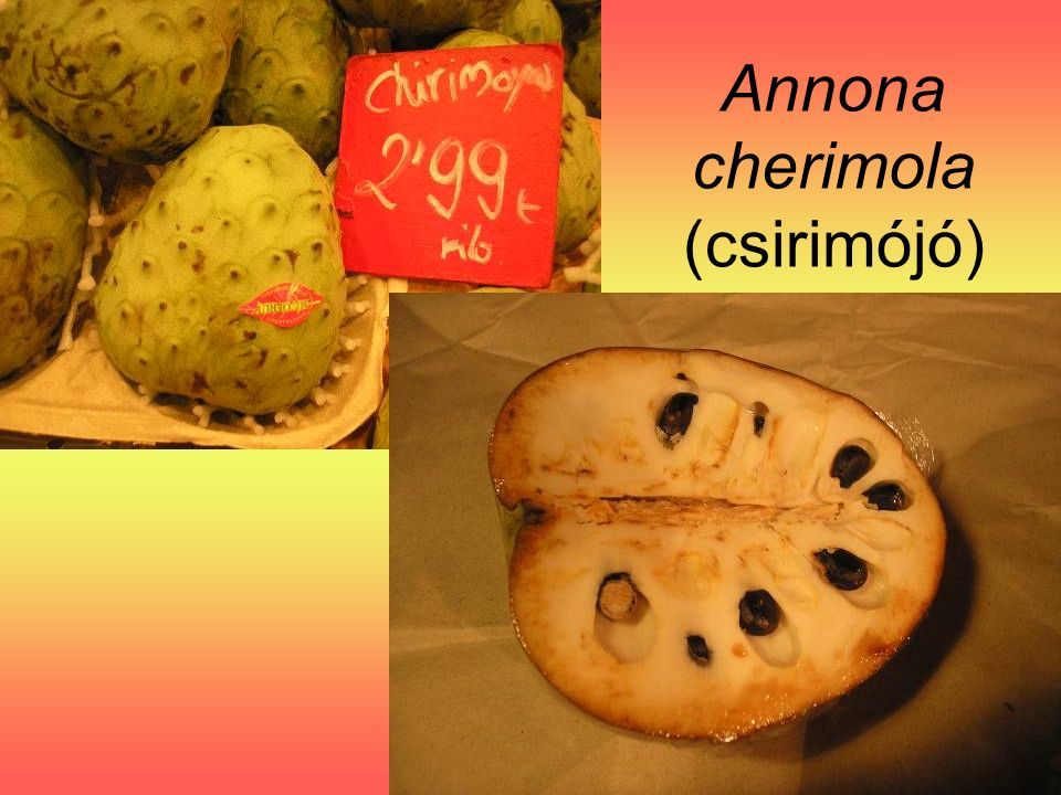 Annona cherimola (csirimójó)