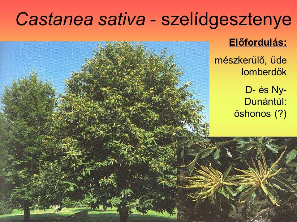 Castanea sativa - szelídgesztenye Előfordulás: mészkerülő, üde lomberdők D- és Ny- Dunántúl: őshonos ( )