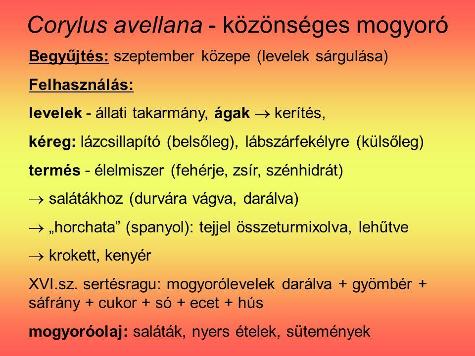 """Corylus avellana - közönséges mogyoró Begyűjtés: szeptember közepe (levelek sárgulása) Felhasználás: levelek - állati takarmány, ágak  kerítés, kéreg: lázcsillapító (belsőleg), lábszárfekélyre (külsőleg) termés - élelmiszer (fehérje, zsír, szénhidrát)  salátákhoz (durvára vágva, darálva)  """"horchata (spanyol): tejjel összeturmixolva, lehűtve  krokett, kenyér XVI.sz."""