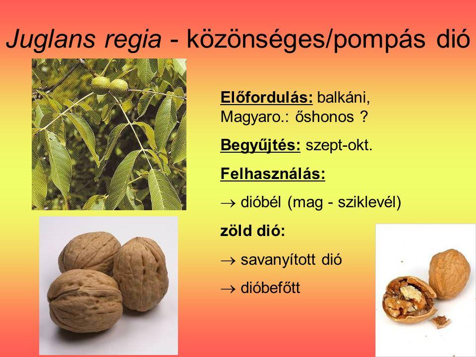 Juglans regia - közönséges/pompás dió Előfordulás: balkáni, Magyaro.: őshonos .
