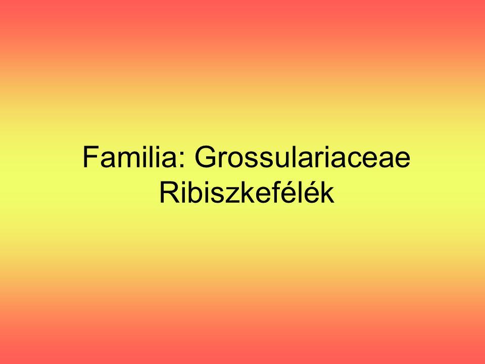 Familia: Grossulariaceae Ribiszkefélék
