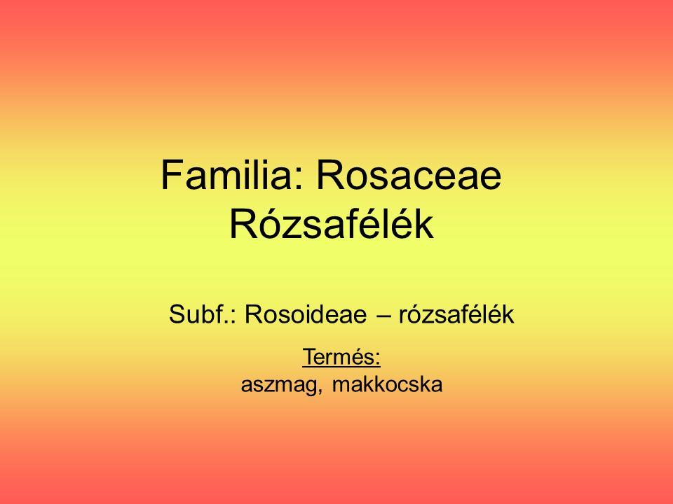 Familia: Rosaceae Rózsafélék Subf.: Rosoideae – rózsafélék Termés: aszmag, makkocska