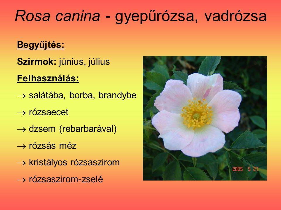 Rosa canina - gyepűrózsa, vadrózsa Begyűjtés: Szirmok: június, július Felhasználás:  salátába, borba, brandybe  rózsaecet  dzsem (rebarbarával)  rózsás méz  kristályos rózsaszirom  rózsaszirom-zselé
