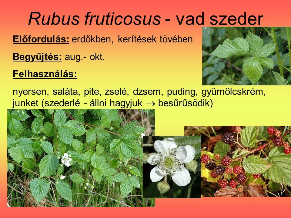 Rubus fruticosus - vad szeder Előfordulás: erdőkben, kerítések tövében Begyűjtés: aug.- okt.