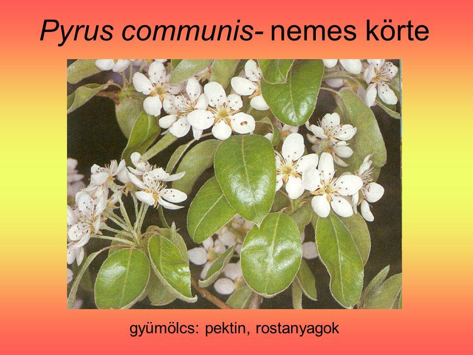 Pyrus communis- nemes körte gyümölcs: pektin, rostanyagok