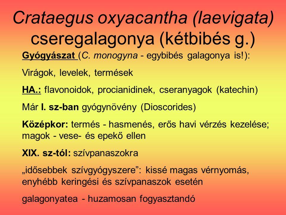 Crataegus oxyacantha (laevigata) cseregalagonya (kétbibés g.) Gyógyászat (C.