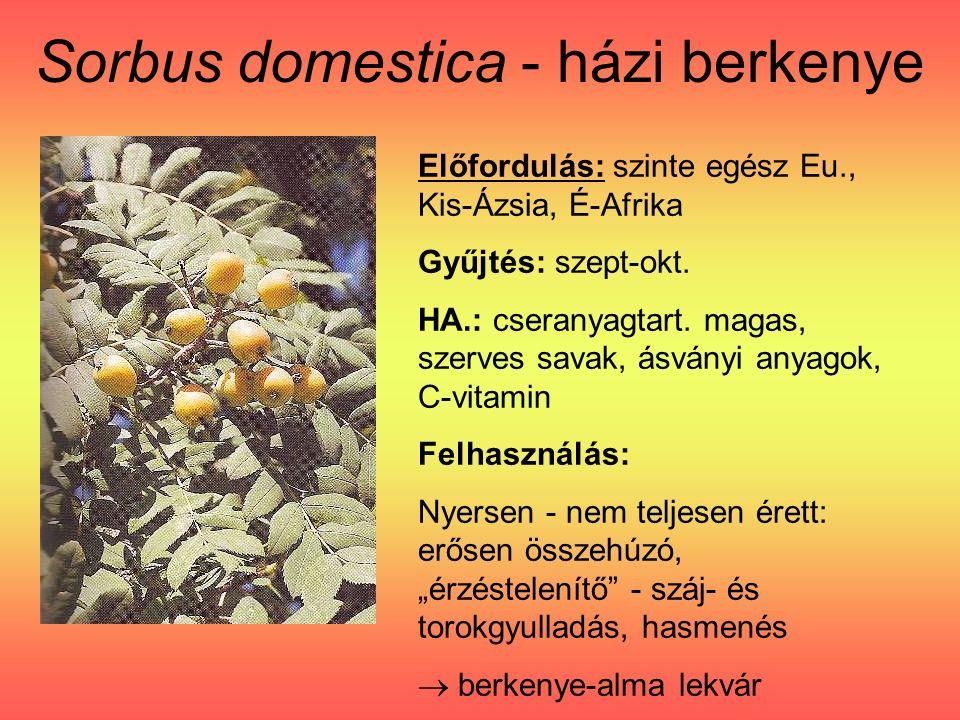 Sorbus domestica - házi berkenye Előfordulás: szinte egész Eu., Kis-Ázsia, É-Afrika Gyűjtés: szept-okt.