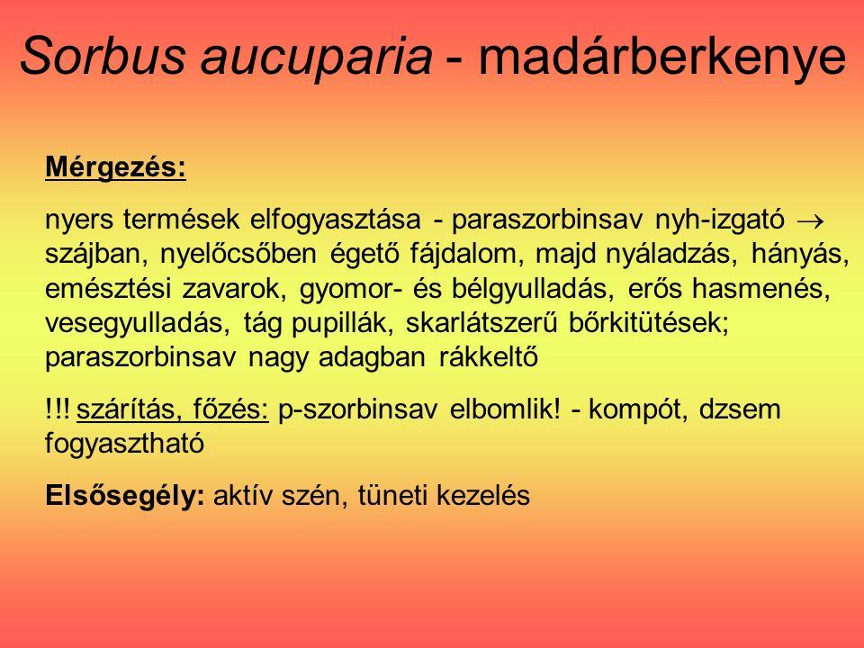 Sorbus aucuparia - madárberkenye Mérgezés: nyers termések elfogyasztása - paraszorbinsav nyh-izgató  szájban, nyelőcsőben égető fájdalom, majd nyáladzás, hányás, emésztési zavarok, gyomor- és bélgyulladás, erős hasmenés, vesegyulladás, tág pupillák, skarlátszerű bőrkitütések; paraszorbinsav nagy adagban rákkeltő !!.