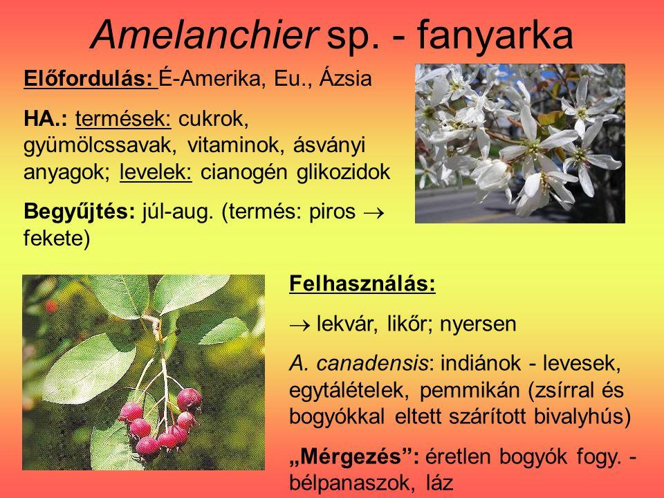 Amelanchier sp. - fanyarka Felhasználás:  lekvár, likőr; nyersen A.